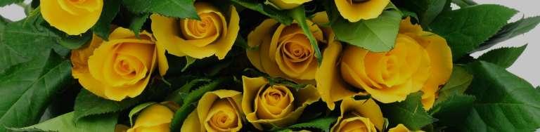 Чи можна дарувати жовті троянди?