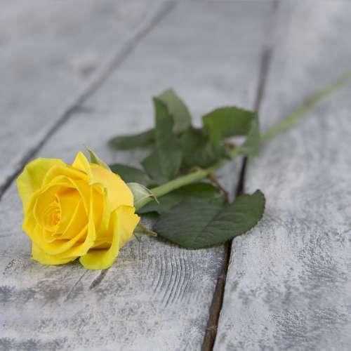 Троянди поштучно