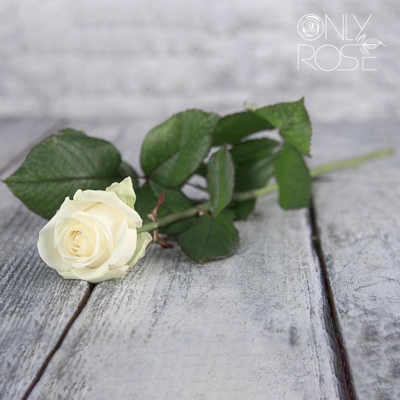Троянда Аваланч