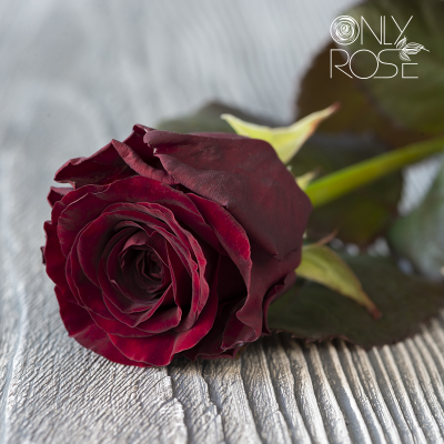 Троянда Ред Наомі