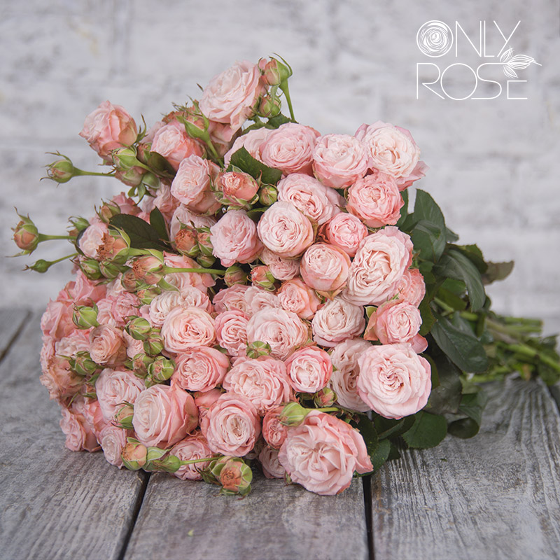 Роза-спрей Мадам Бомбастик