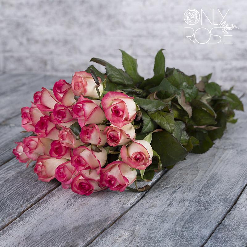 Троянда Джамілія