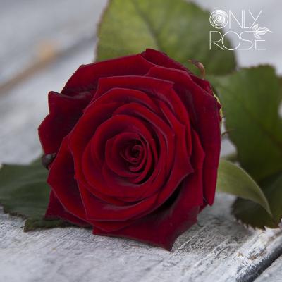 Троянда Гран Прі