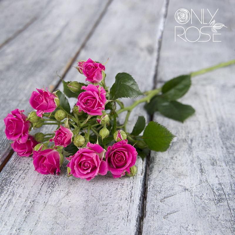 Роза-спрей Лавли Лидия