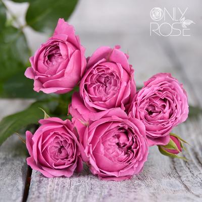 Троянда-спрей Місті Баблз