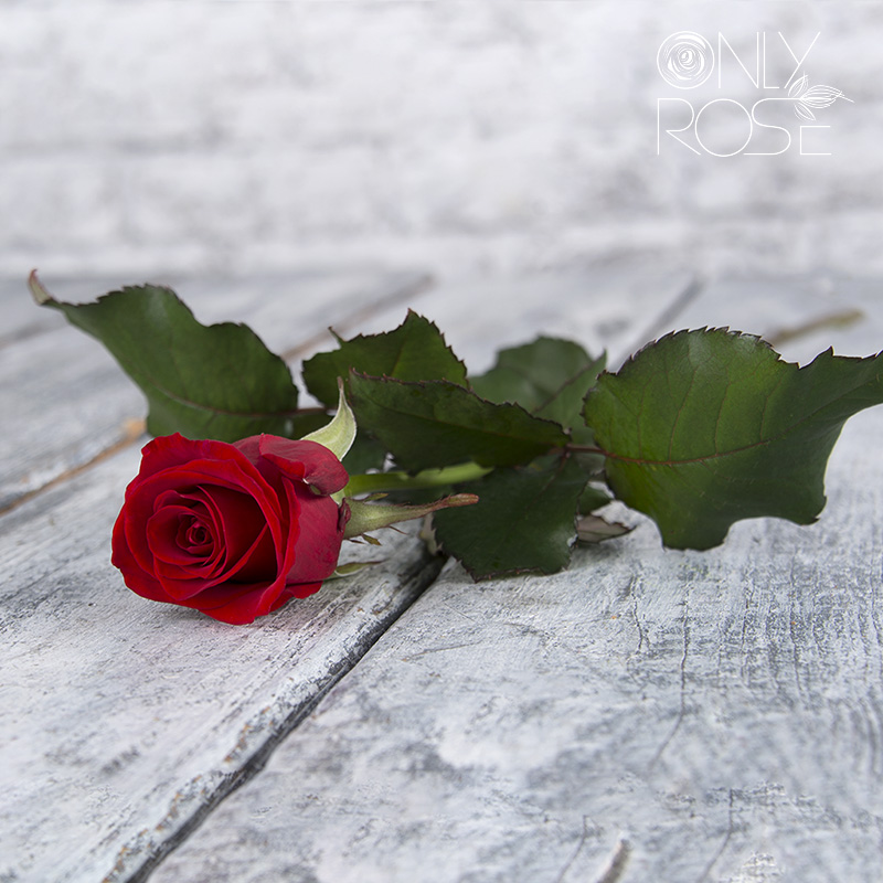 Троянда Ред Ігл
